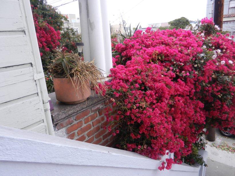 out my front door (2)