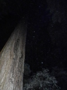Redwood Territory