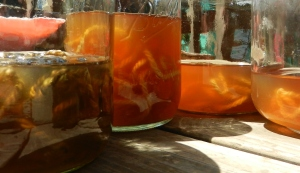 natural dyeing with rosemary
