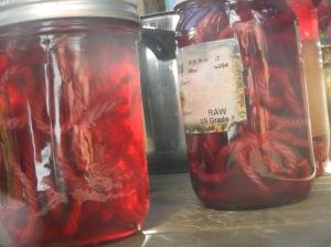 Bougainvillea dye