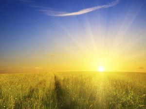 Glorious yellow sunrise over yellow fields.