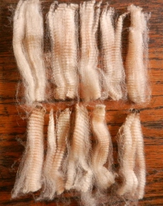 Ten locks pulled from my Merino fleece—all remarkably consistent in length and crimp.