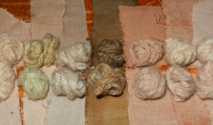 Tiny bals of yarn and swatches of cotton dyed with yellow dock. One light green yarn, one deep yellow yarn, others rusty and pinks, some quite pale.