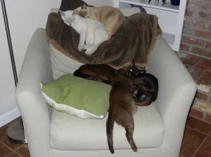 Five cats, differnt colors, stuffing themselves on top of and onto a chair.