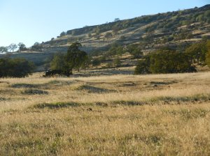 Oak scrublands from Lower Trail.