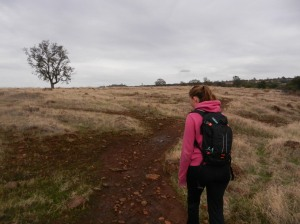 Rutted track through oak and grasslands on rainy day.