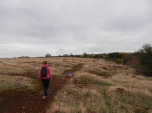 Lizzie, North Rim Trail on a rainy day.