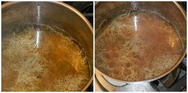 Spanish Moss, boiled for about 30 minutes, left, rich yellow 50 minutes, right, deep gold