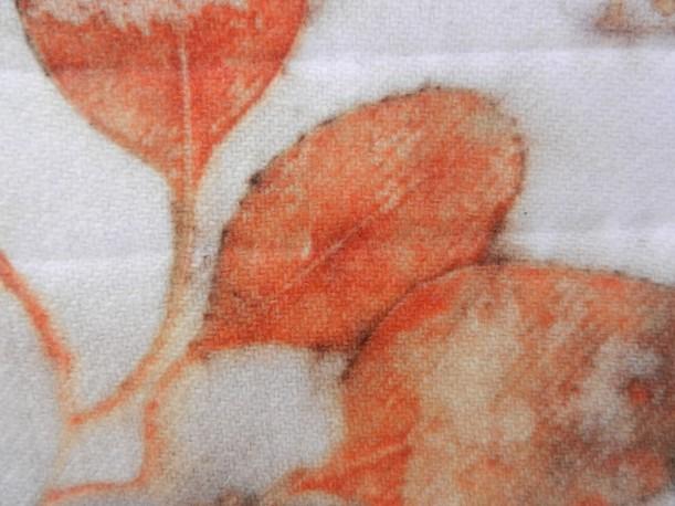 Stoneman Eucalyptus