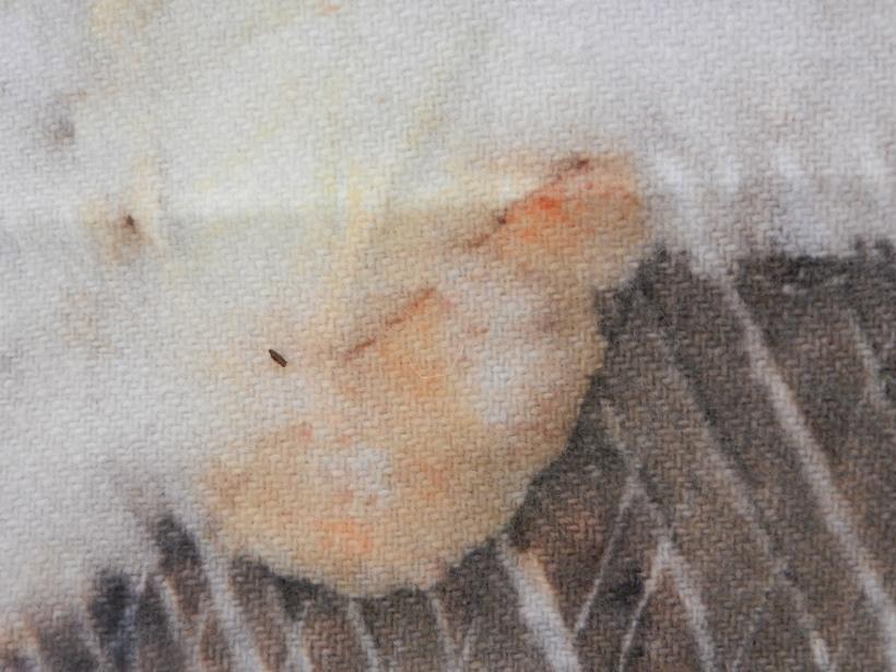 """title=""""Stoneman Eucalyptus Detail"""""""