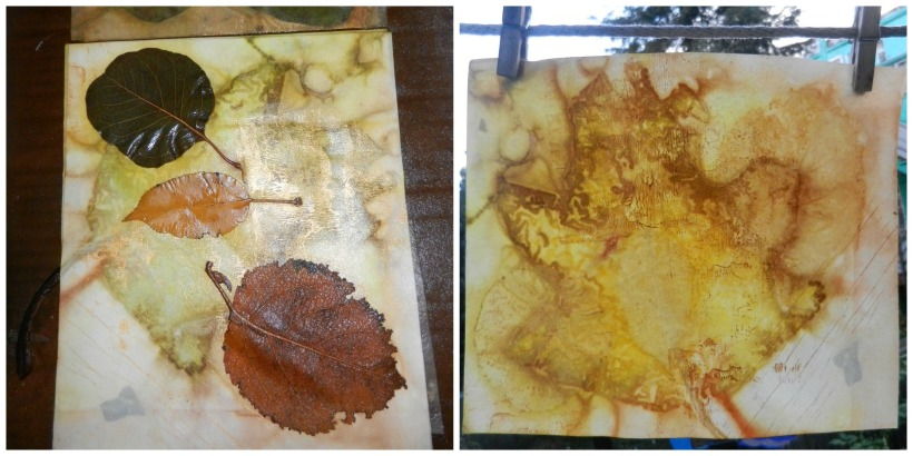 lasell leaf collage 2