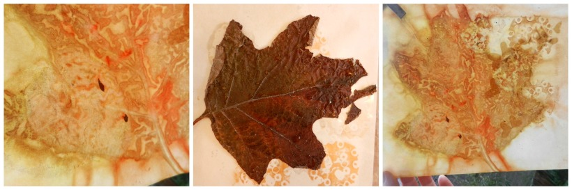lasell leaf collage