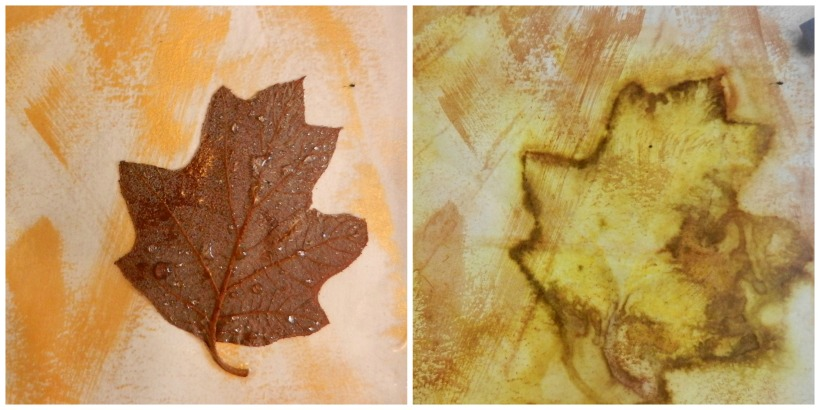 small lasell leaf collage