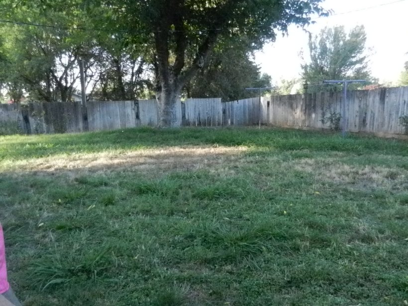 Spacious backyard with laundry line already installed!